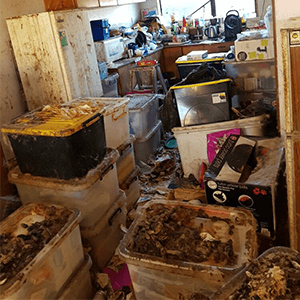 Animal Waste Cleanup